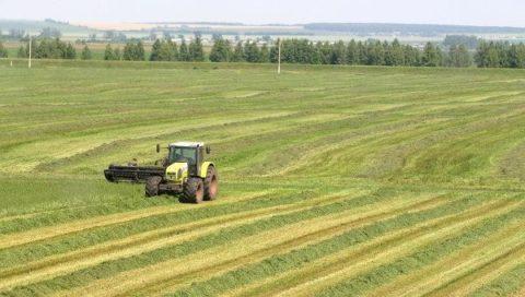 Особенности и перспективы перевода земель сельхозназначения в другую категорию