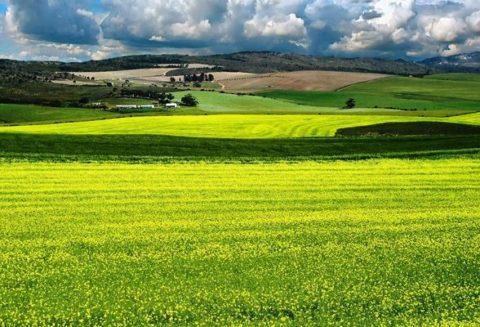 Закон об обороте земель сельхозназначения последняя редакция