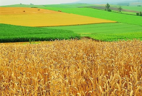 Сфера действия закона «Об обороте земель сельхозназначения»