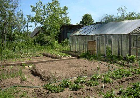 Как можно перевести земли сельхоз назначения в ИЖС